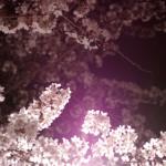 sumo_2010_ericBates_028