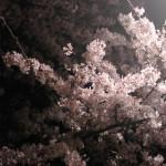 sumo_2010_ericBates_030