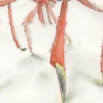 crabSketch_legs