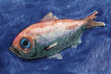fish001_v0041.jpg
