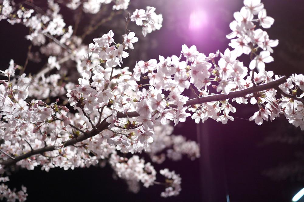 sumo_2010_ericBates_0271.jpg