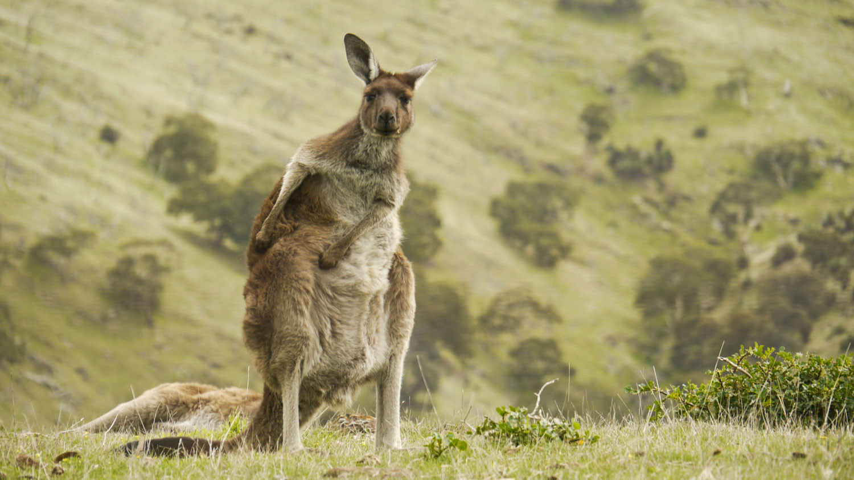 australia_0011-e1366342173942.jpg